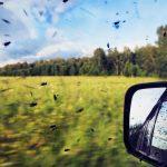 Jak szybko pozbyć się owadów zszyb ikaroserii?